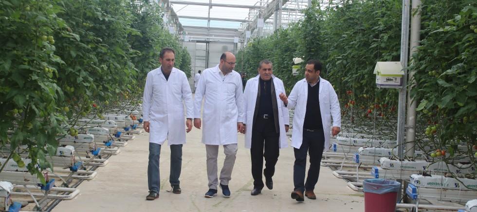 Erhan Tenekeci Diyadin'de domates serasını ziyaret etti